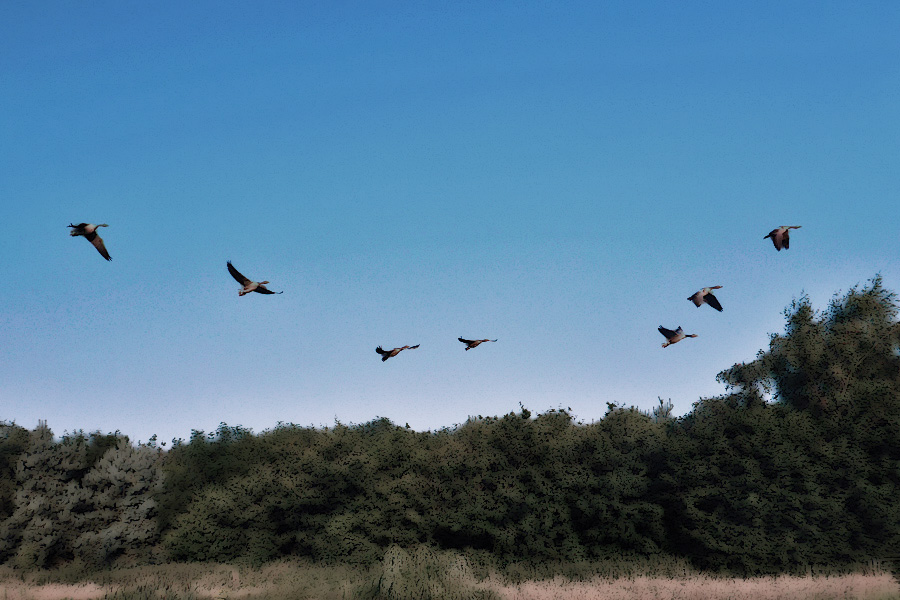 Cowardly geese taking flight at the mere sight of my naked windmilling and cartwheels.