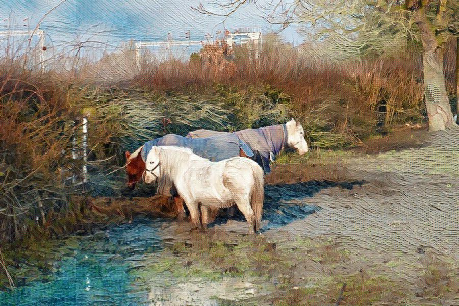 HorsesInMudWithRailwayLine